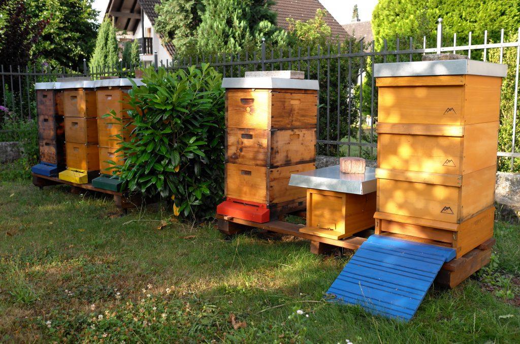Bienen-Standort Kleinostheim