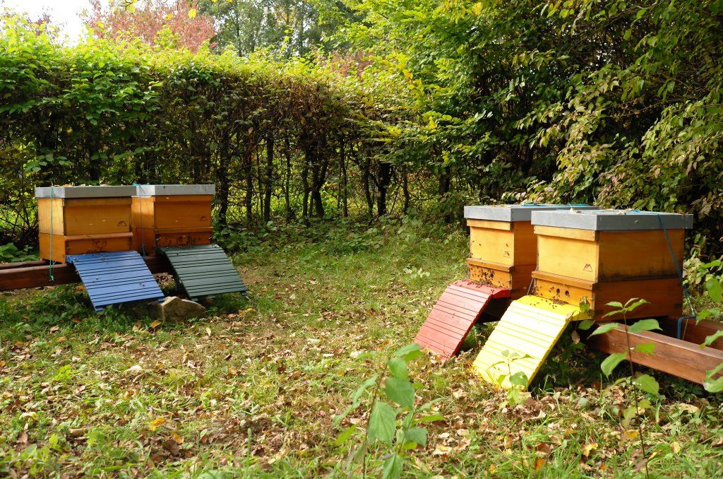 Bienen-Standort Naturerlebnisgarten